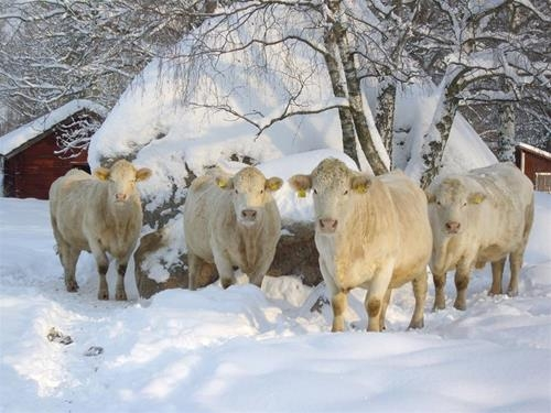 ekologiskt kött stockholm