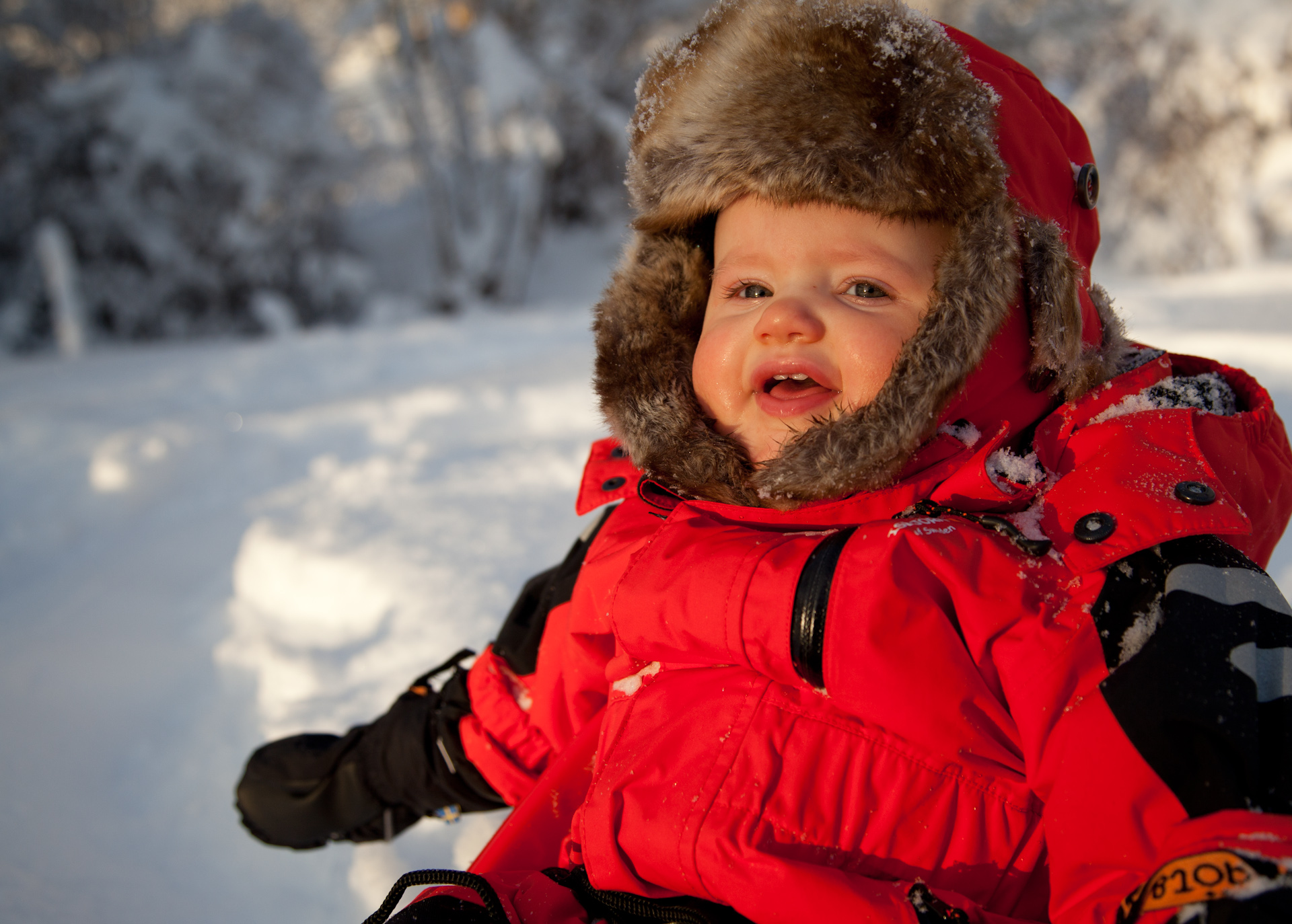 isbjörn overall