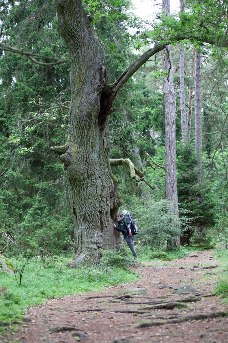 bilder från trollskogen